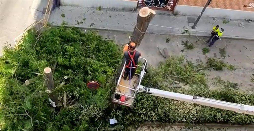 """El PSOE alerta de una """"tala indiscriminada de árboles"""" en Puerta del Ángel para crear plazas de aparcamiento"""