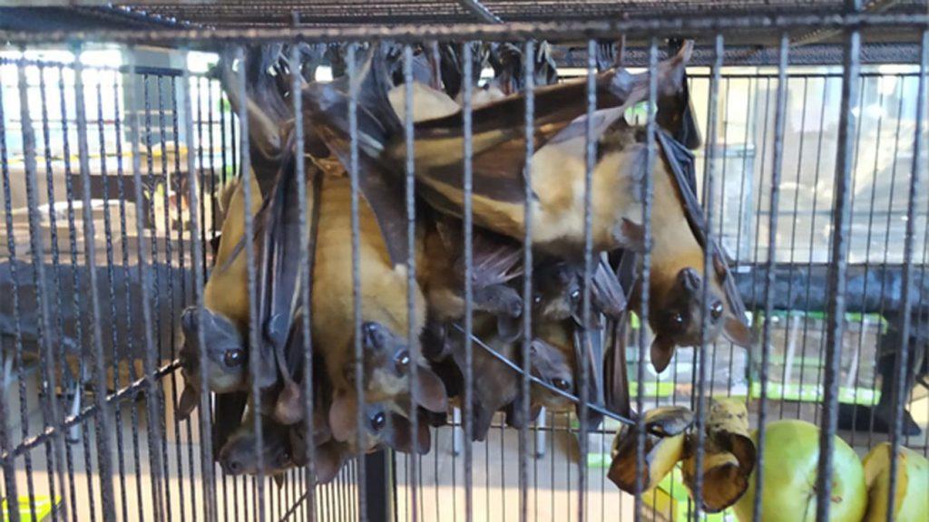 Incautan 30 murciélagos, una boa constrictor y una pitón en la Feria ExpoTerraria de la Casa de Campo