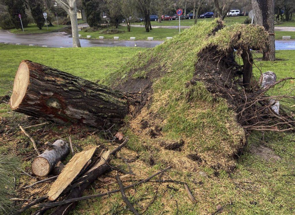 El Ayuntamiento replantará 100.000 árboles para compensar los destrozos de Filomena